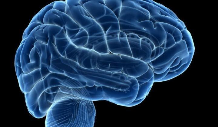 Laboratoryjne mózgi wykazały aktywność