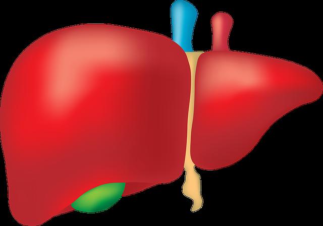 Bakterie jelitowe, które mogą powodować uszkodzenie wątroby