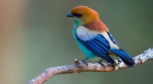 Spadek populacji ptaków w USA i Kanadzie