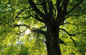 42 procent gatunków drzew w Europie zagrożone wygięciem