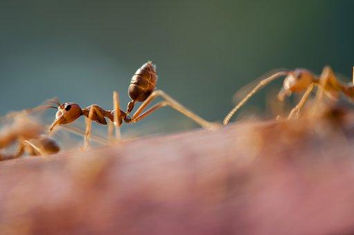 Jak mrówki zarządzają ruchem?