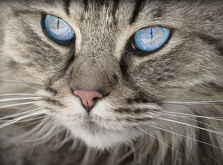 Komórki macierzyste kota