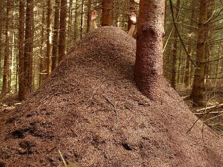 Najszybsze mrówki świata