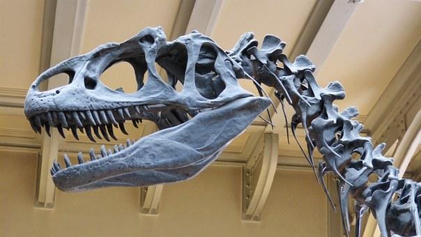 Pod Iłżą odkryto fragmenty kości sprzed 150 mln lat