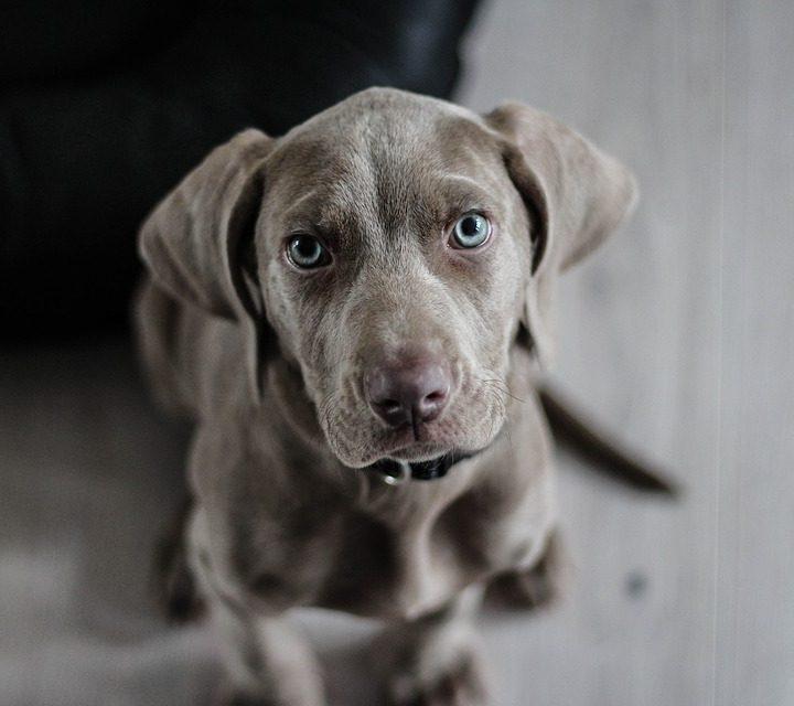 Okrutne testy na zwierzętach