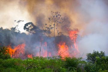 Pożary i wylesianie lasów Amazonii