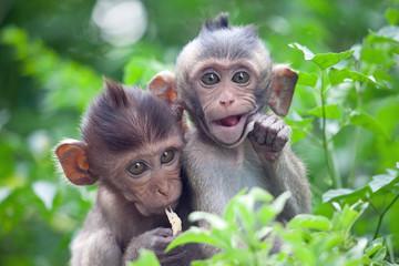 Małpy dopasowują swój styl życia do ludzi