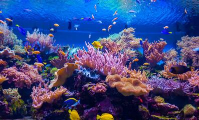 Metale zagrożeniem dla koralowców