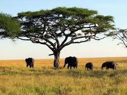 Afrykańskie rośliny tropikalne zagrożone wyginięciem