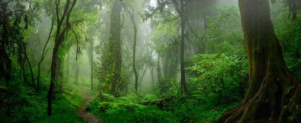 Szybkie tępo wylesiania Amazonii