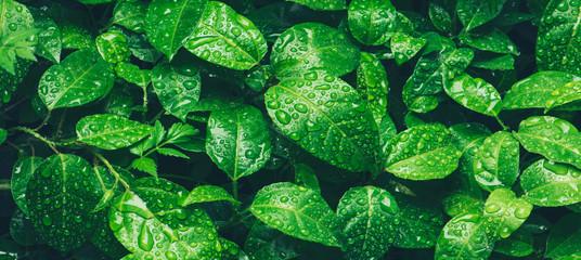 Ultradźwięki generowane przez rośliny