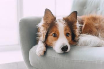 Psy potrafią liczyć?