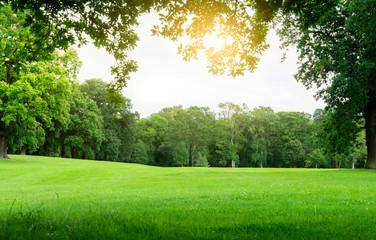 Czy kształt parków ma wpływ na zdrowie?
