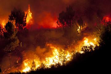 Skutki australijskich pożarów
