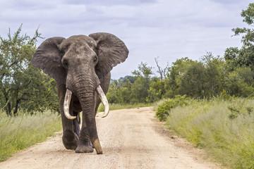 Operacja dentystyczna słonia Ninio