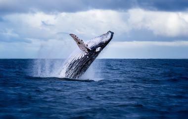 Wieloryby na wakacjach