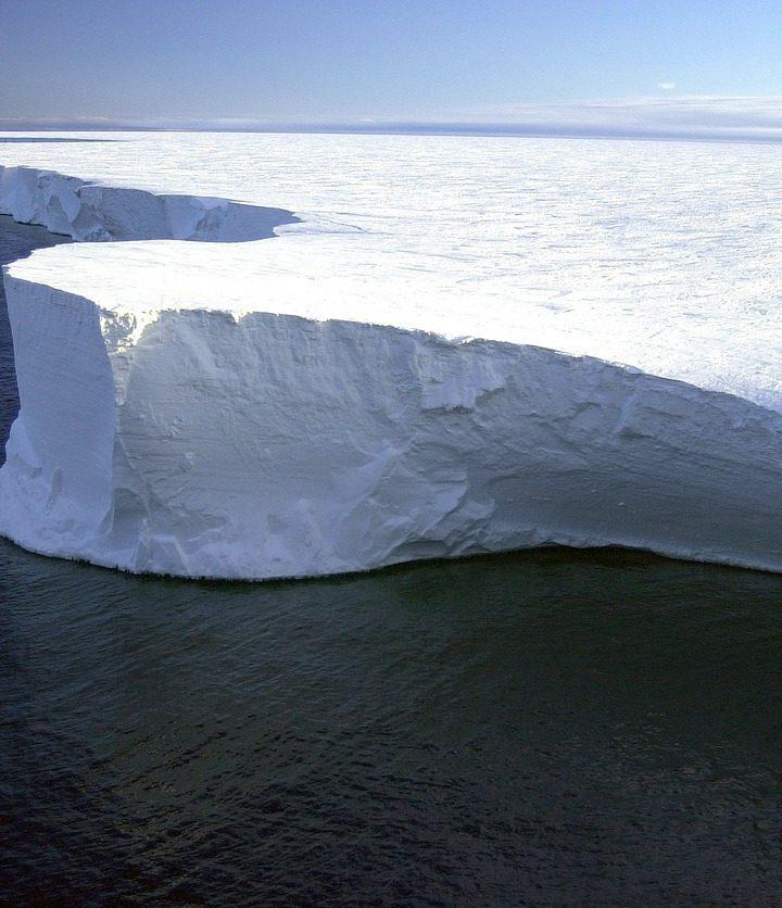 Naukowcy odkryli ślady deszczowego lasu na Antarktydzie