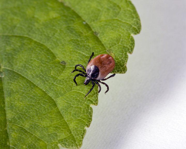 Instytutu Włókiennictwa kontra kleszcze, komary i meszki